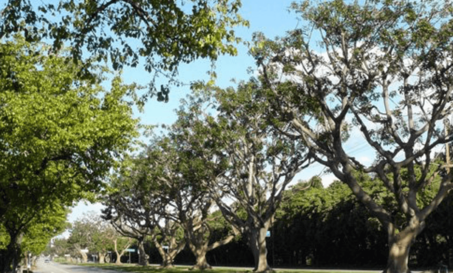 Brentwood Tree Forum July 10th